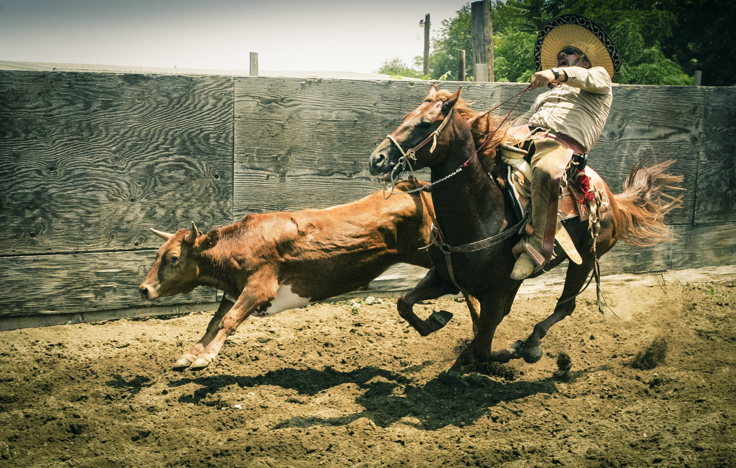 Mexican Rodeo Exposure And Other Worldly Morsels